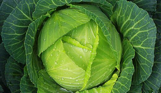 まるごとキャベツを上手に使いこなして、野菜をモリモリ食べよう!