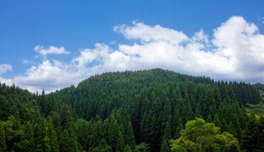2000年以上のお付き合い。日本人のDNAに刻まれた香り高い「杉」の空間
